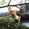 New Product Light Weight Electric Grape Pruning Shears for Tea Plantation